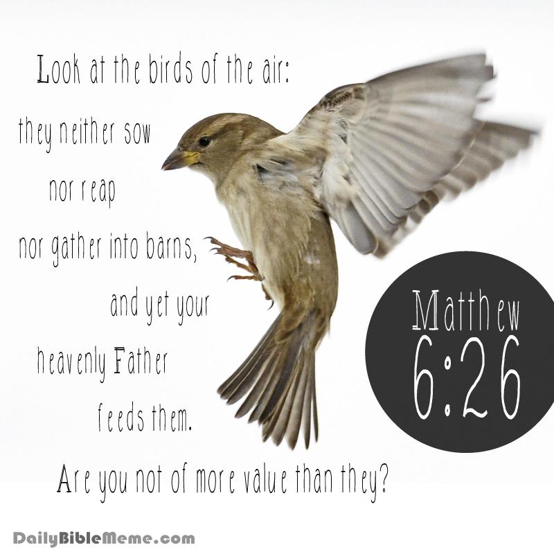 Matthew 6:26 | Daily Bible Meme